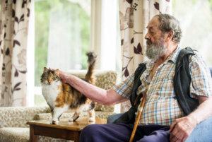 Levin's resident cat enjoys pats.